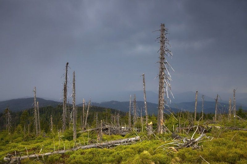 gorce, rain, Gorce mountainsphoto preview