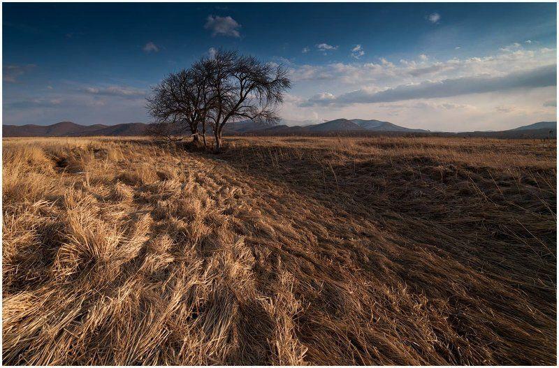 Травы-муравыphoto preview