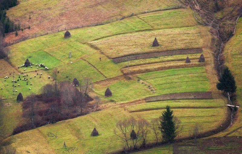 карпаты, осень, овцы, пастух ...Овцепас...photo preview
