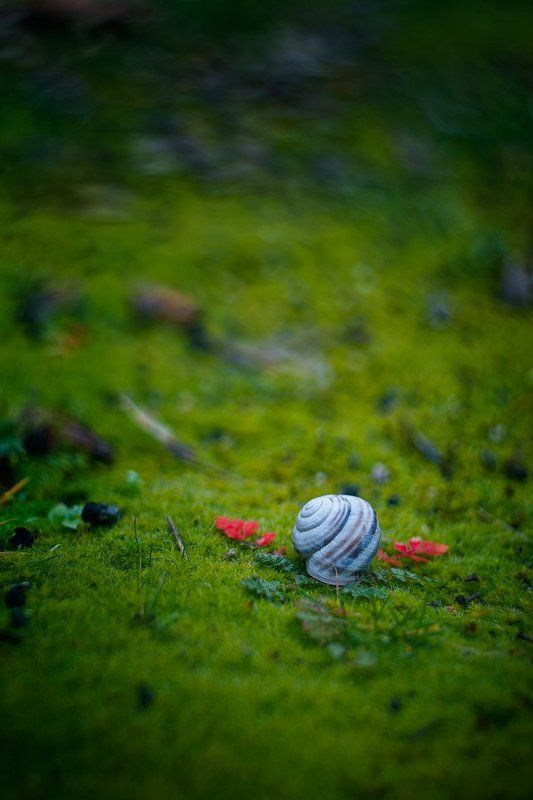 snail, shell, grass, green, leaves Angelphoto preview