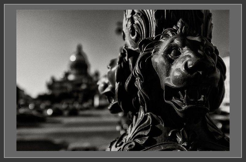 питер, санкт-петербург, исаакиевская площадь Питерphoto preview