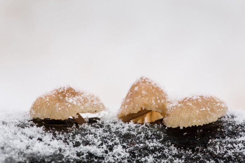 гриб, белогорье, зима, снегопад, минимализм Подснежнички :)photo preview