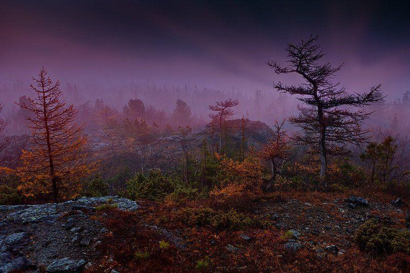 Тёмными ночамиphoto preview